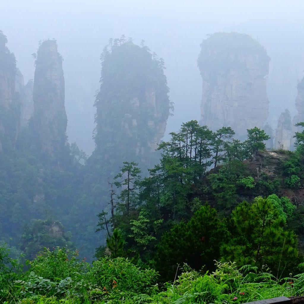 Chinese tcm herbs