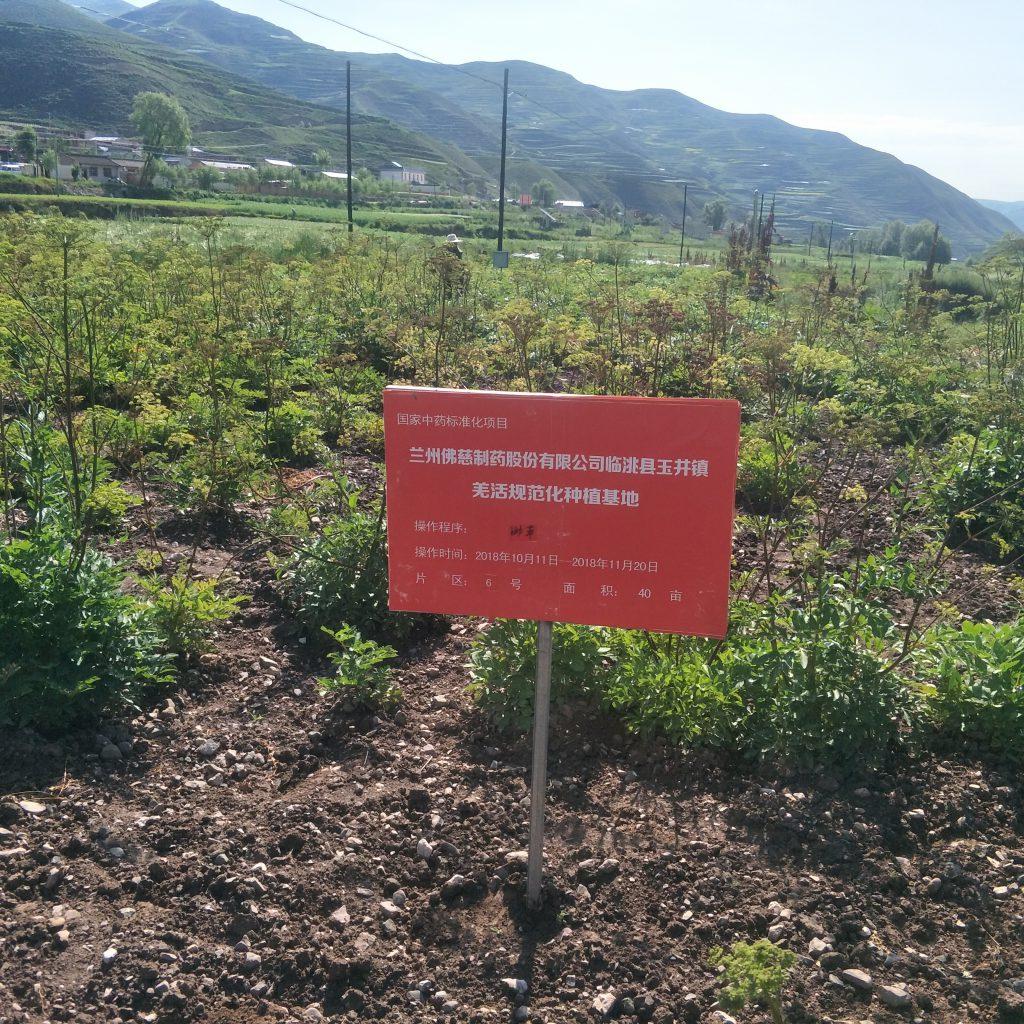 Chinese tcm herbs 草药